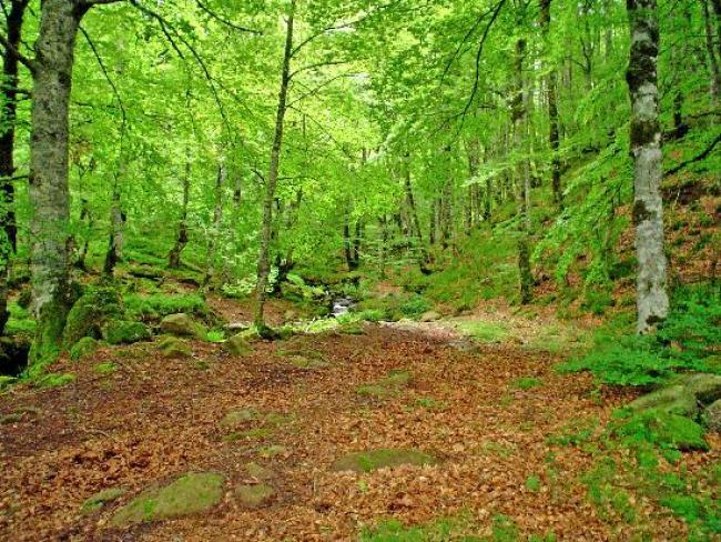 Selva Irati.jpg